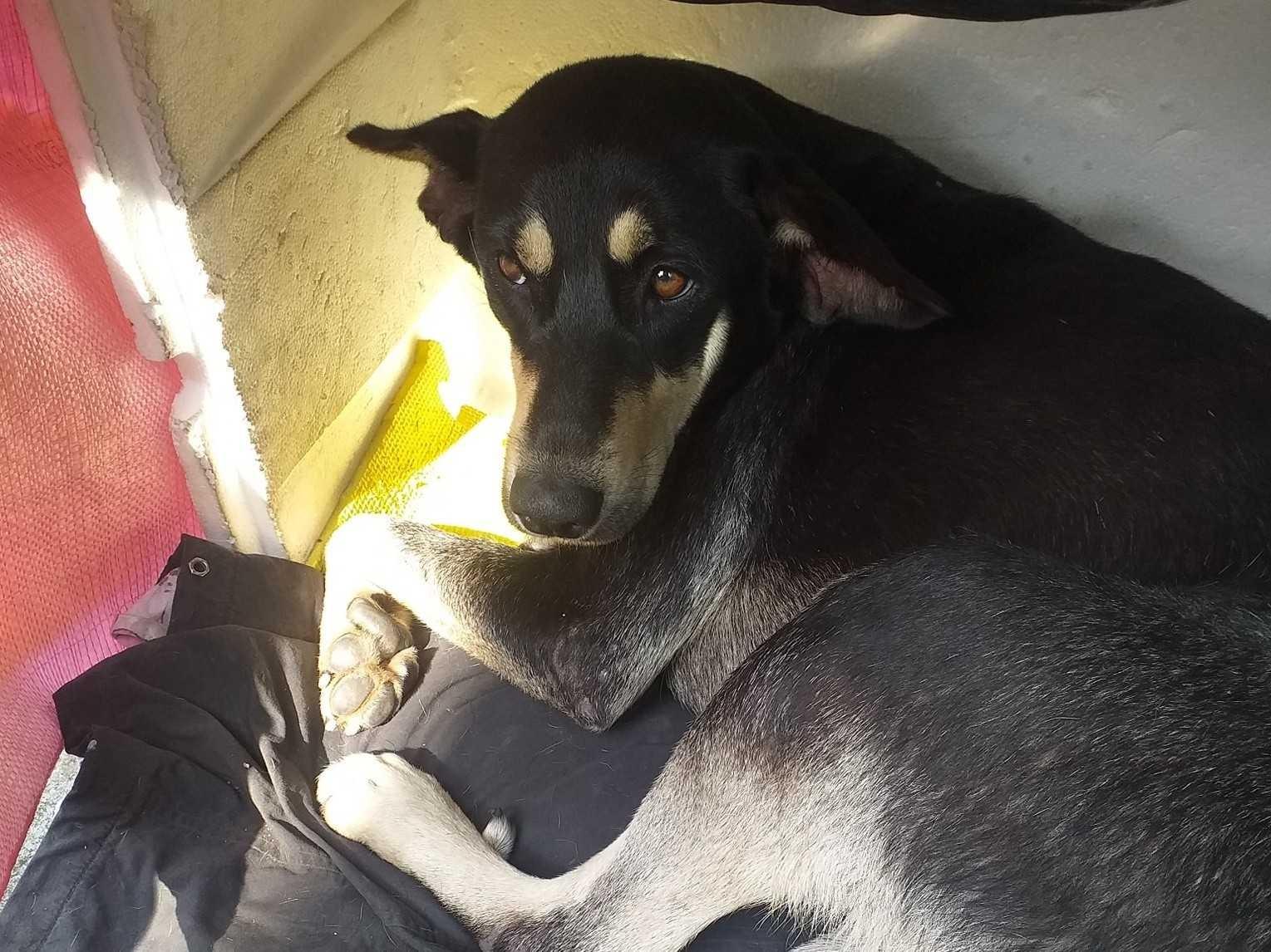 發現一隻受傷害怕的流浪狗 有沒有愛狗人士 能領養這隻毛小孩呢