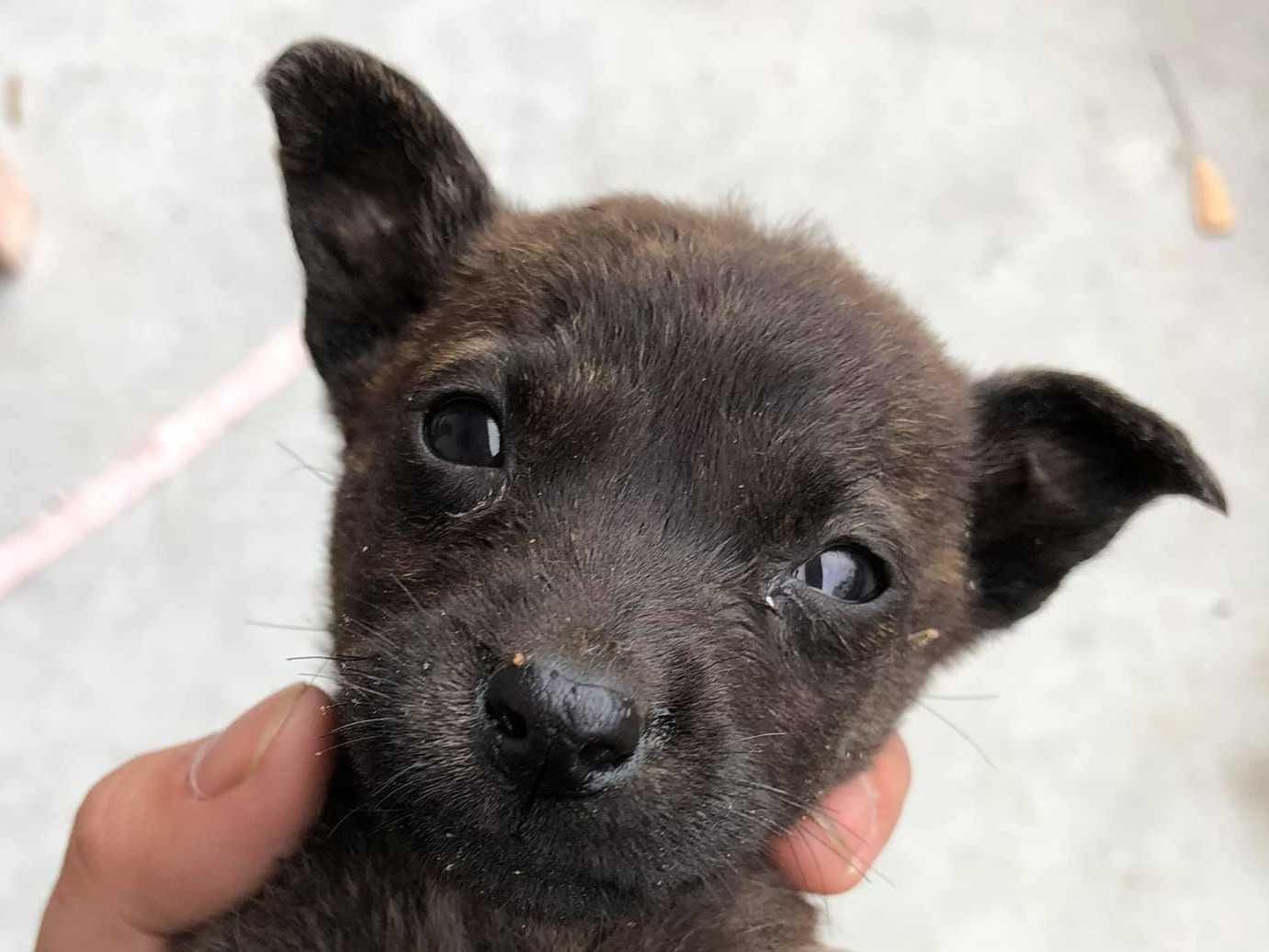【可全台到府送養】花蓮台九線發現一窩幼犬急尋認養人