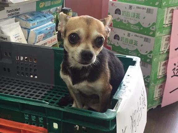 🆘緊急🆘  家中愛犬🐶走失,已有植入晶片